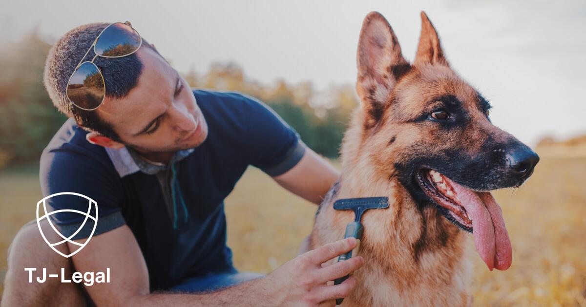 Hundesteruer - daň za psa v Nemecku